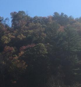 woodson-trees